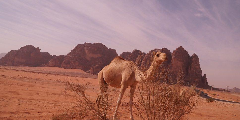 Wadi Rum - woestijn van de maan