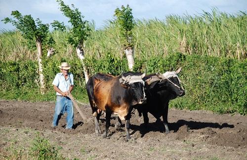 Cuba Ploegen