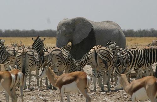 Etosha N.P. Namibië