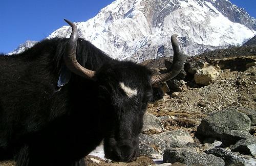 Dieren in Nepal