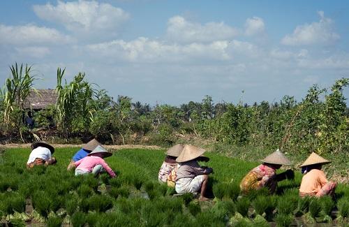 Lombok rijstvelden