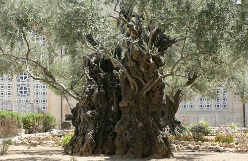 Hof van Getsemane