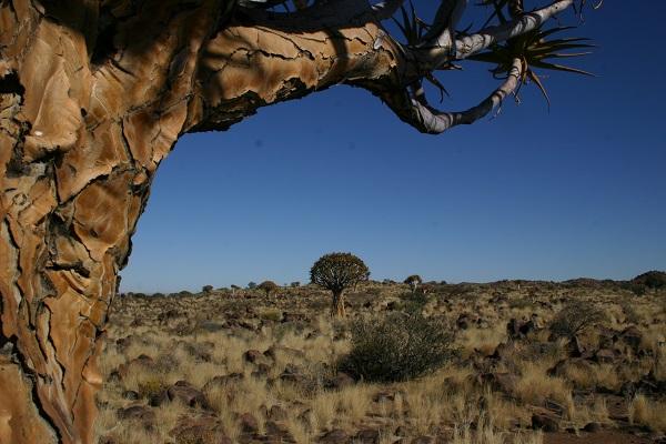 Dag 5 - Namibië
