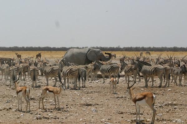 Dag 7 - Namibië